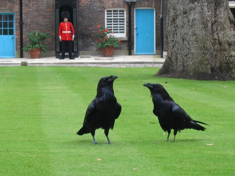 London_tower_ravens